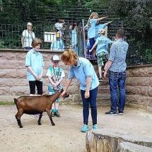 KiFeu_Zoo